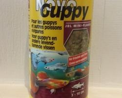 Guppy-Toulouse-fidèle&compagnie