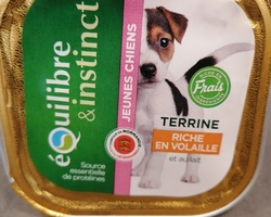 Equilibre&instinct-chiot-Toulouse